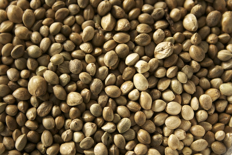 Семена конопли в картинках список штатов легализовавших марихуану