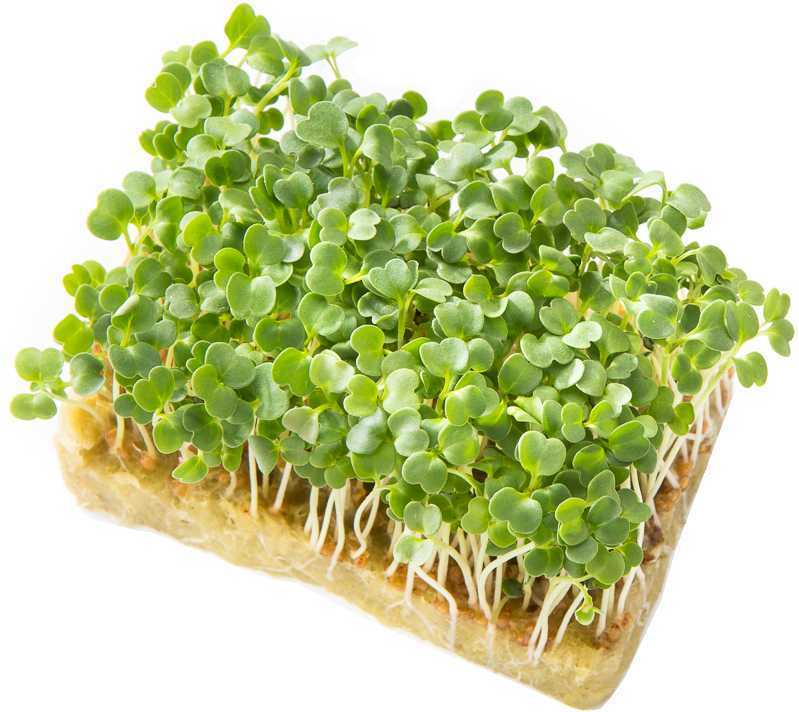 Микрозелень Брюквы 50 г. крафт лоток