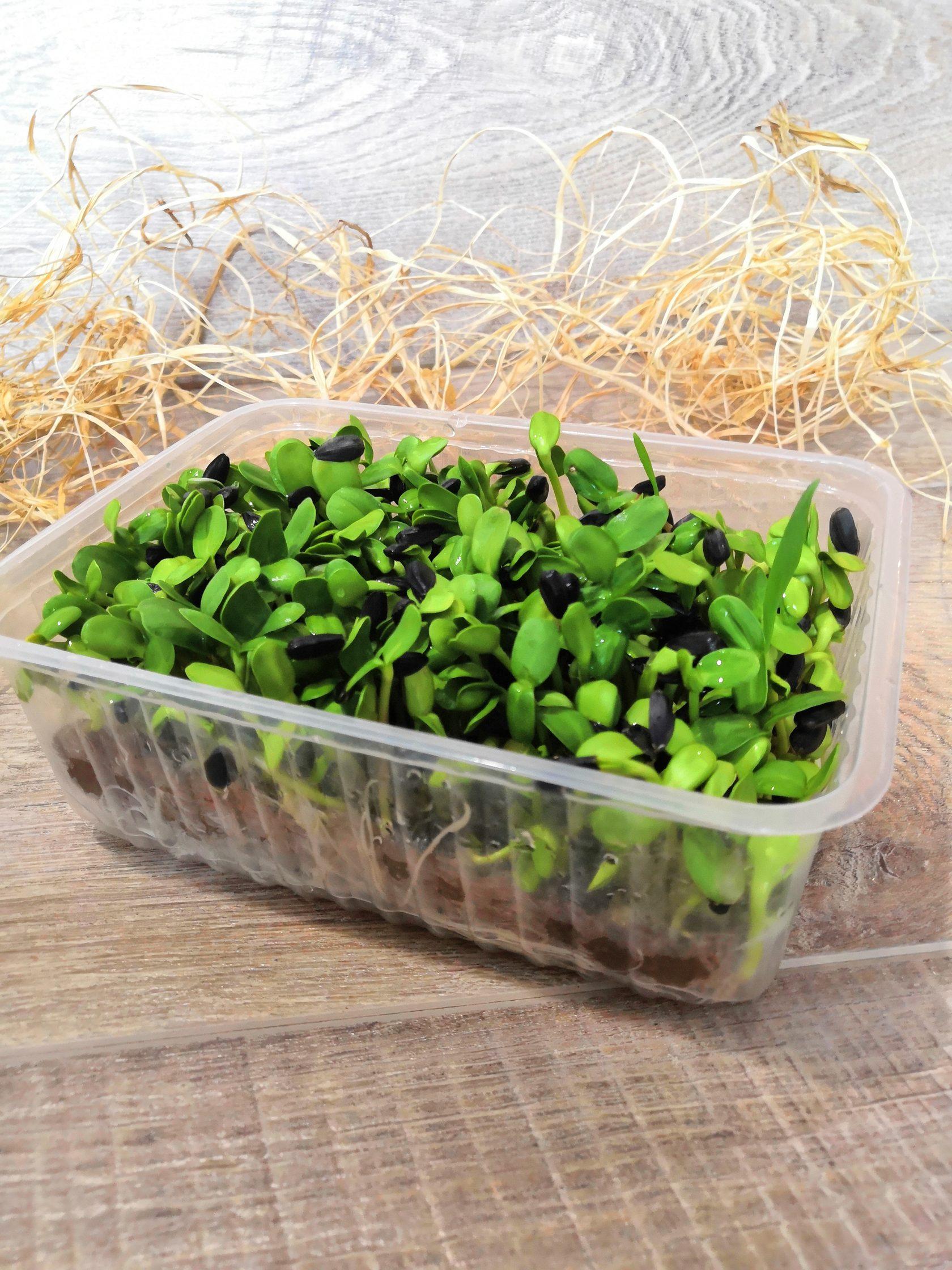Микрозелень Подсолнечника 100 г. стакан 0,5