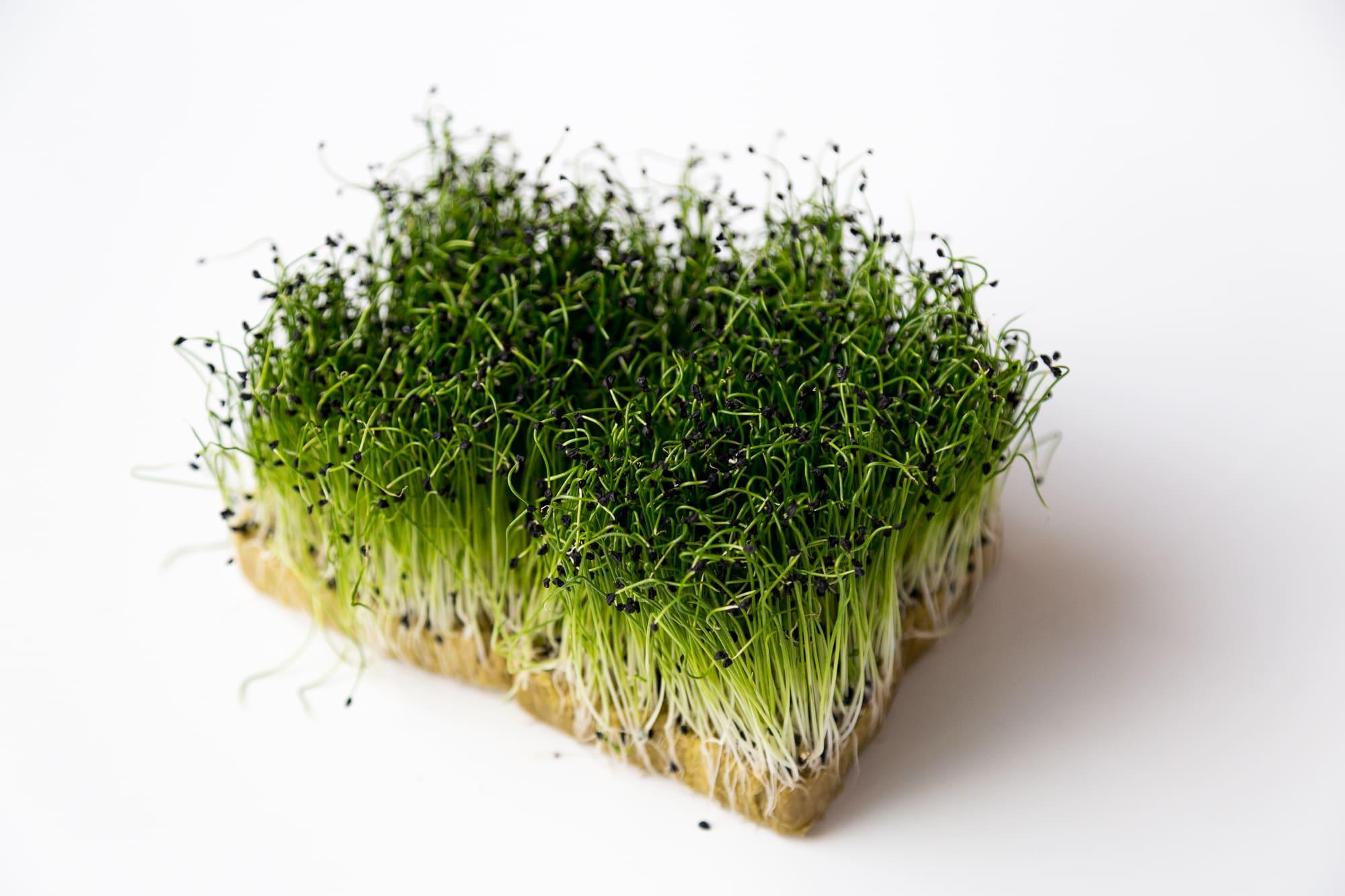 Микрозелень Лук-Шнитт 50 г. крафт лоток