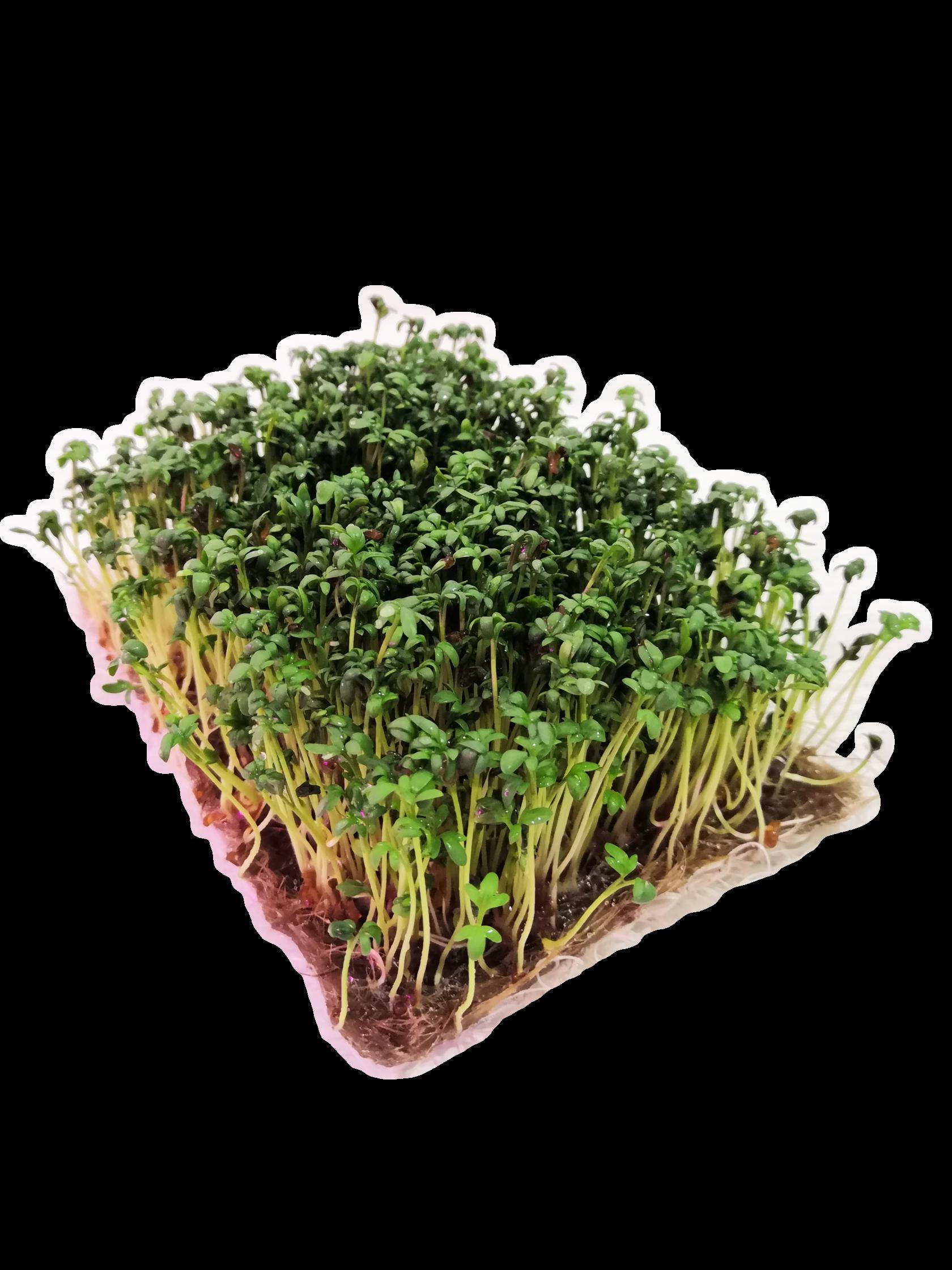 Микрозелень Кресс-Салат 50 г